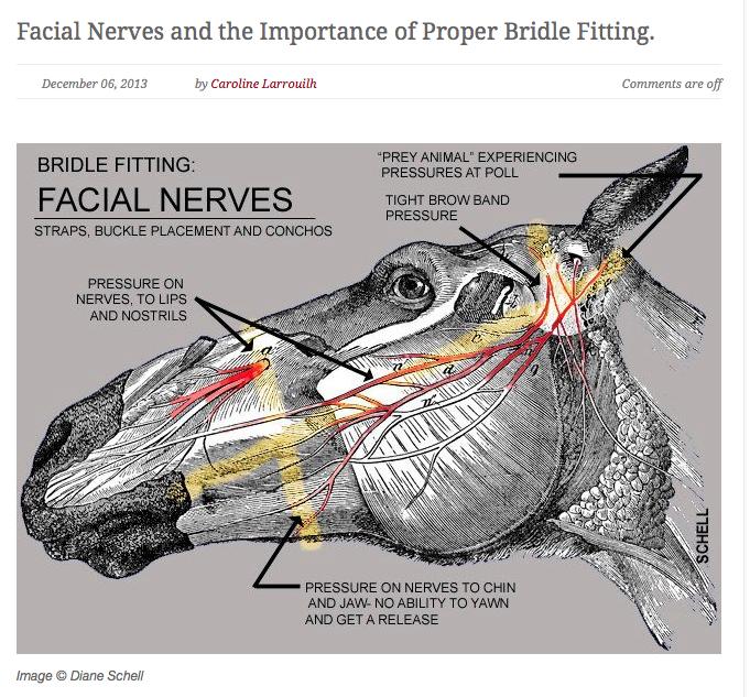 facial-nerves-image.png