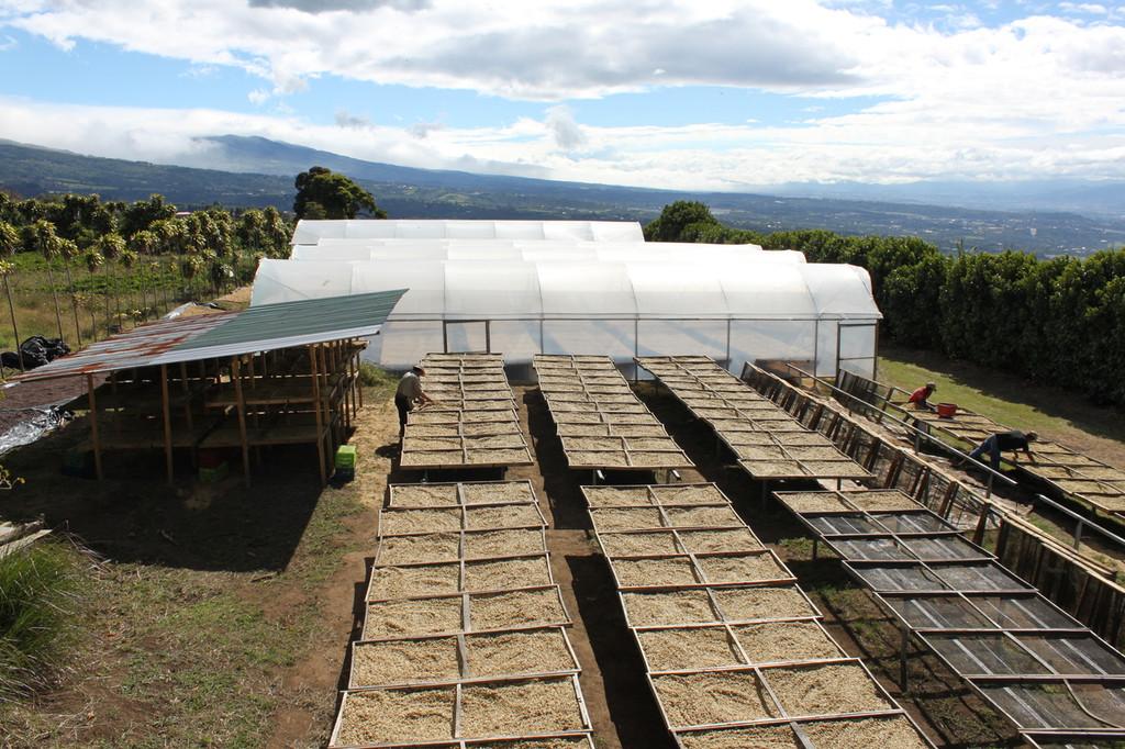 Cerro San Luis Honey - Costa Rica