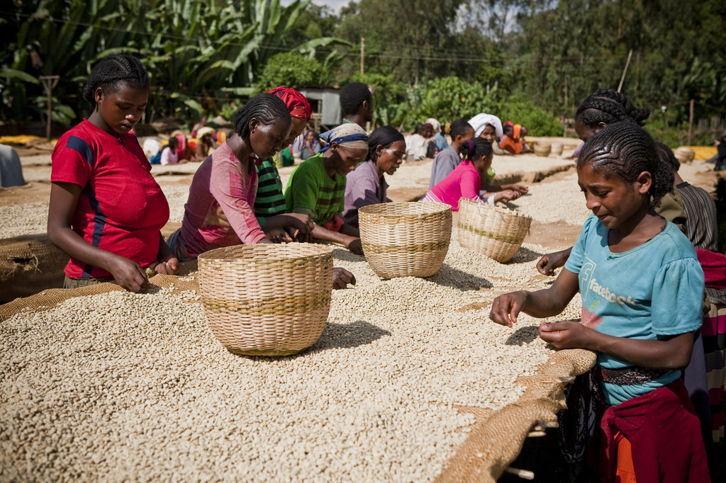 Misty Valley Natural - Ethiopia - New 2019 Crop