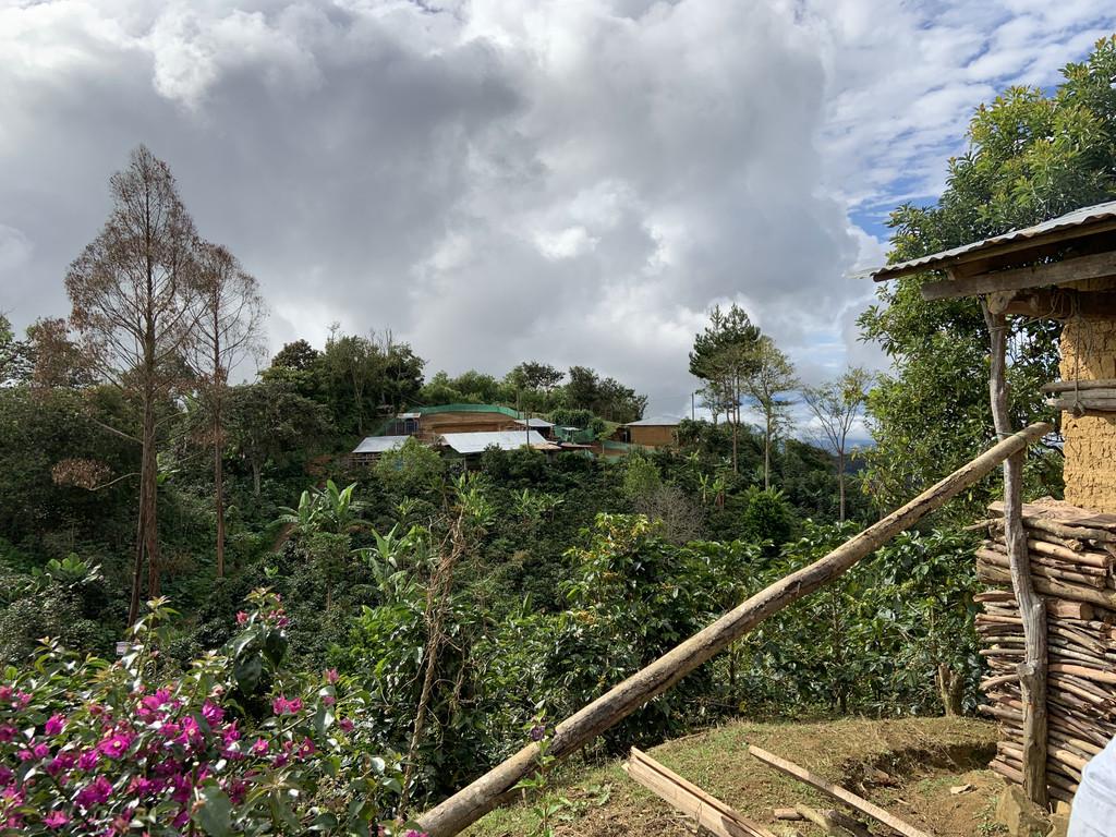 Grano de Oro - Peru