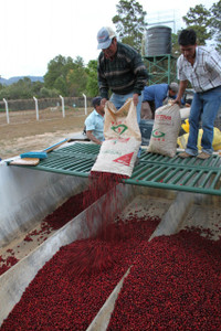 Finca La Merced - Guatemala