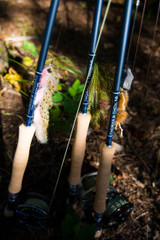 Thomas and Thomas Avantt Fly Rods