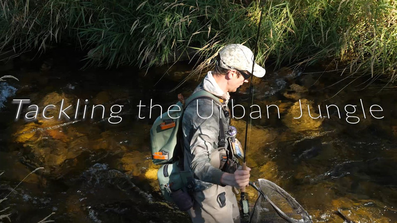 Our New Vlog Post Tackling the Urban Jungle