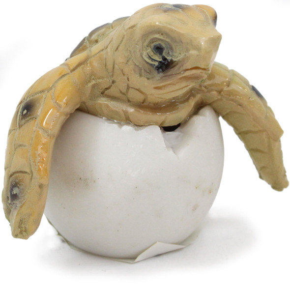 Sea Turtle Egg Hatchling