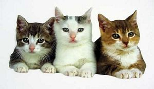 Three Kittens Cut-out Note Card Blank Inside - CDC-0028E