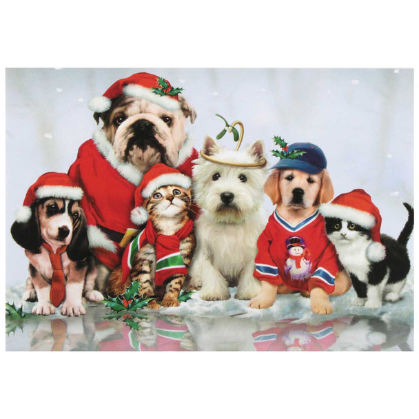 Cats & Dogs Christmas Card 10 Card Box C73787