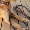 Denim Soft Trainer LITE Leash & Double Up Collar