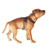 EzyDog Crosscheck Harness On Small Dog