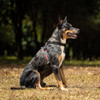 EzyDog Crosscheck Dog Training Harness - Lifestyle