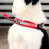 Turns Express or Convert Harness into a front-pull harness for improved control