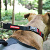 EzyDog Checkmate Collar - Large