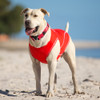 EzyDog Rashie Swim Shirt For Dogs