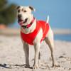 EzyDog Rashie Swim Shirt For Dogs
