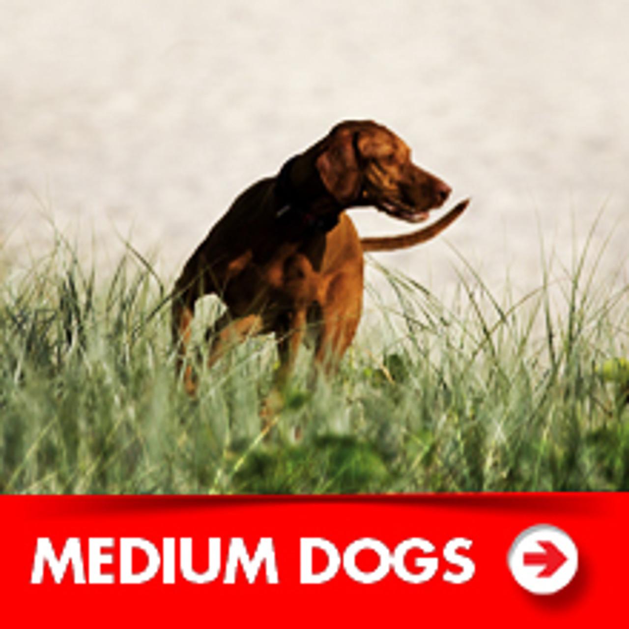 Medium Dog Accessories