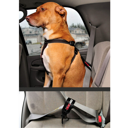 Dog Seat Belt Harness >> Seat Belt Restraint