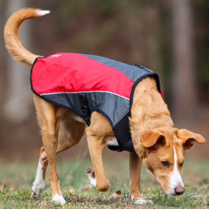 Orange - EzyDog Element Jacket