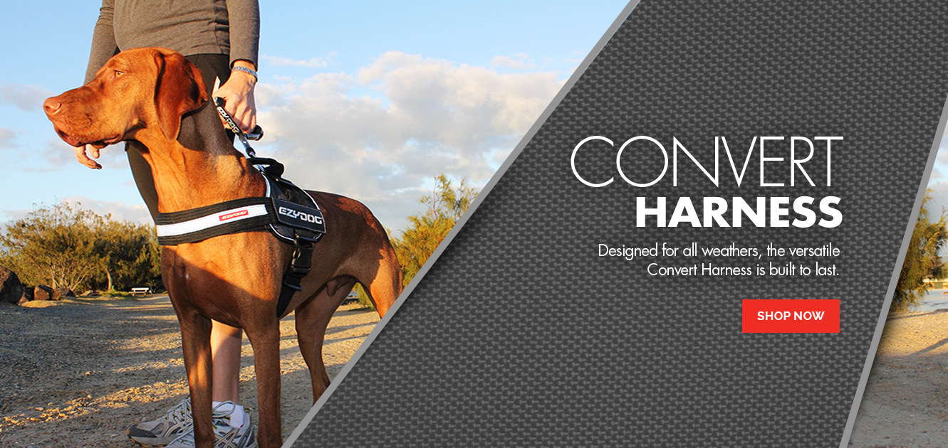 Convert Harness - Unmatched Versatility