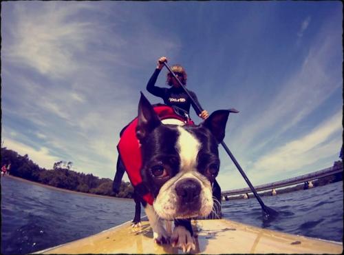 optimized-yoji-paddle-boarding-lowres.jpg