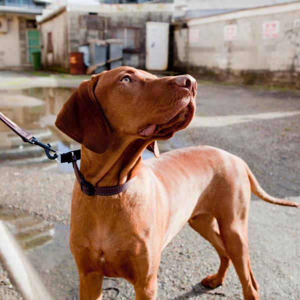 EzyDog dog training lifestyle image