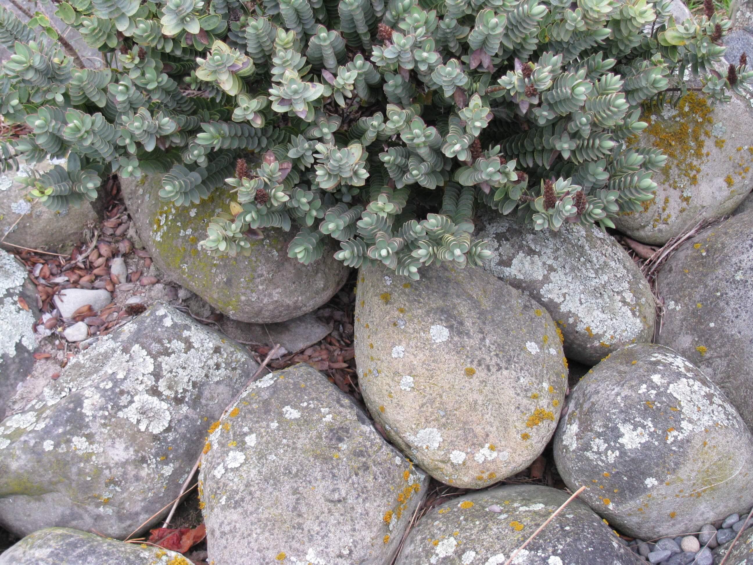 7.-rangitata-river-stones.jpg