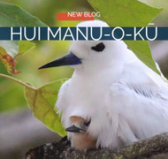 Oahu's Amazing Fauna: Native Hawaiian Seabird