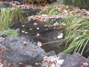 Pond Prep for Autumn & Winter Seasons