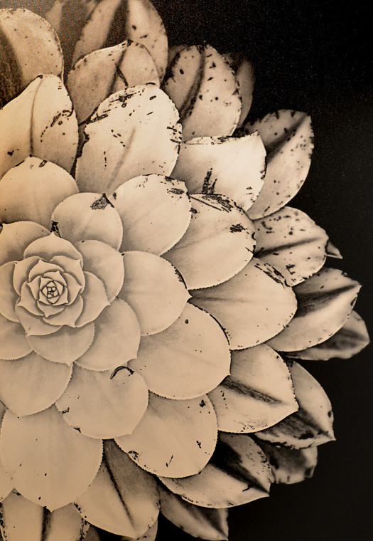 """""""Bloom"""" Giclee On Canvas"""