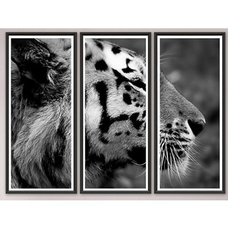 "Trowbridge ""Tiger"" Photo Triptych by Jamie Thorn - Set of 3"