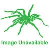 Green Skeleton Tarantula