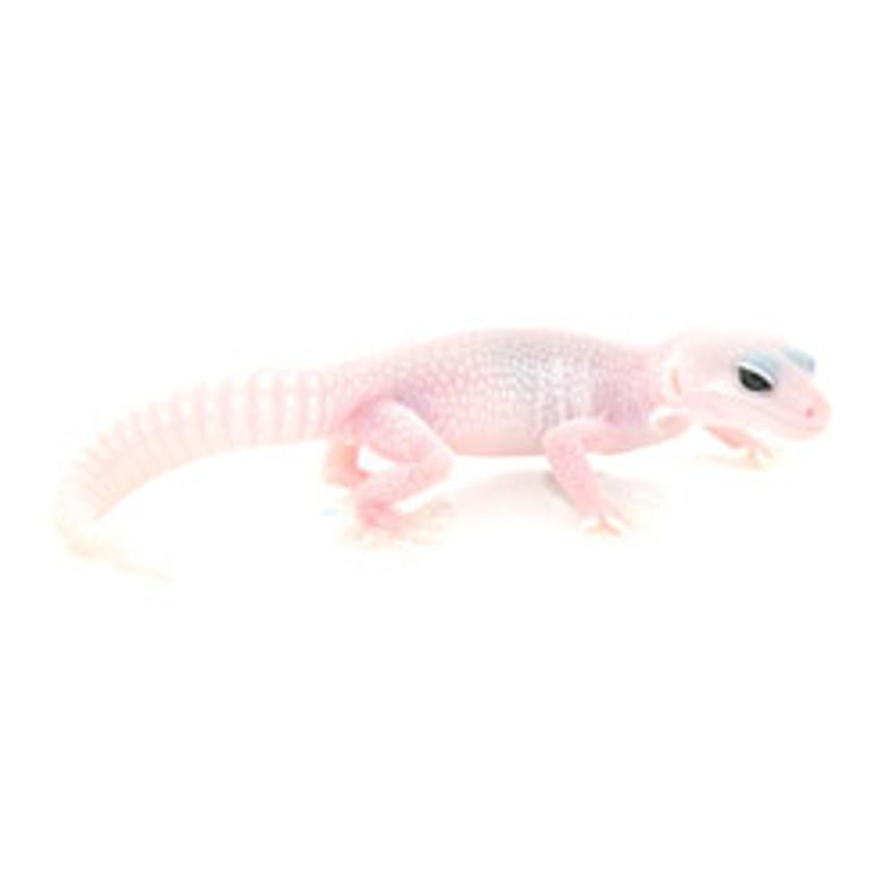 Super Snow Blizzard Leopard Gecko (Eublepharis macularius) Baby