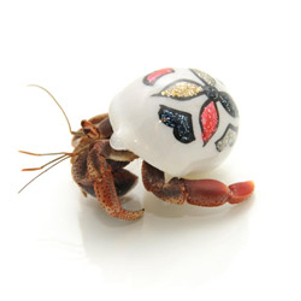 Hand Paint Hermit Crab
