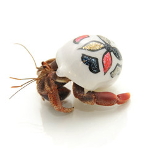 Hand Paint Hermit Crab