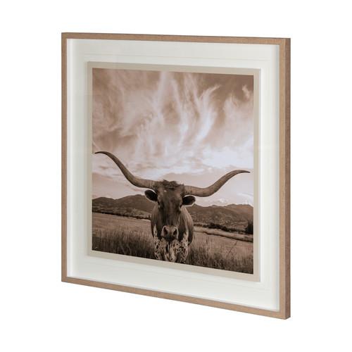 Texas Longhorn Photograph
