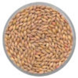 Newdale Barley Seed - 250 sq. ft.