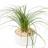 Home Office Indoor Plants Vancouver | Adele Rae Florists