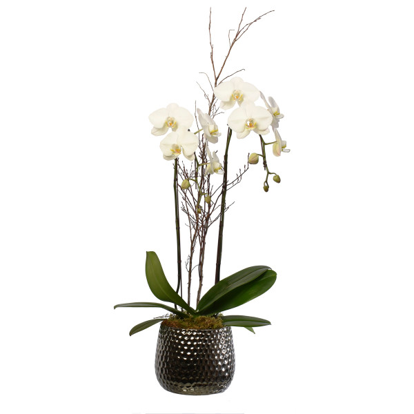 Orchid plant in a pot from Adele Rae Florist in Burnaby