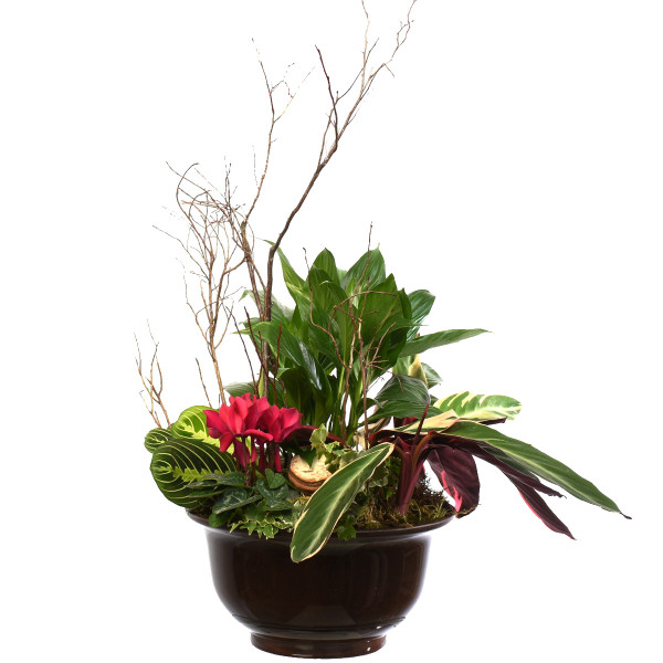 A mini garden with mixed plants and flowers for office or home from local florist in Burnaby Adele Rae