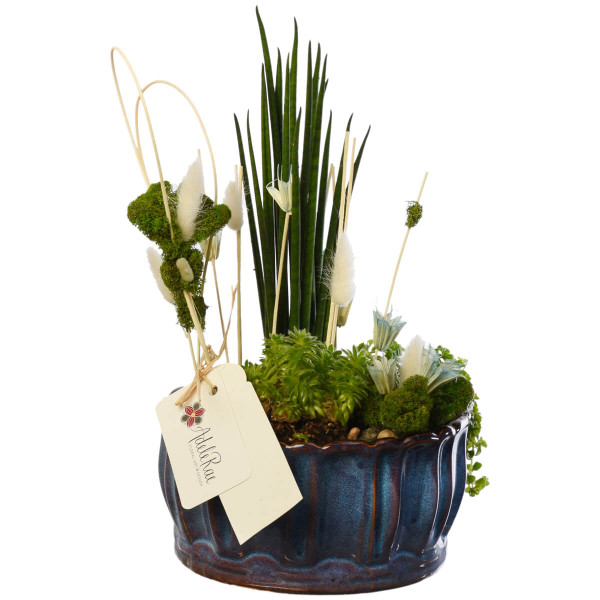 Sympathy Dish Garden for delivery in Vancouver, Coquitlam and Burnaby