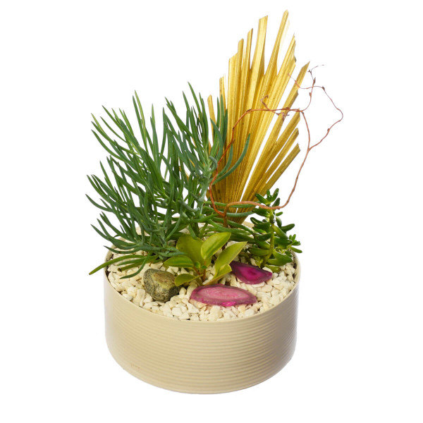 Oasis succulent garden plant for office in Vancouver from Adele Rae Florist