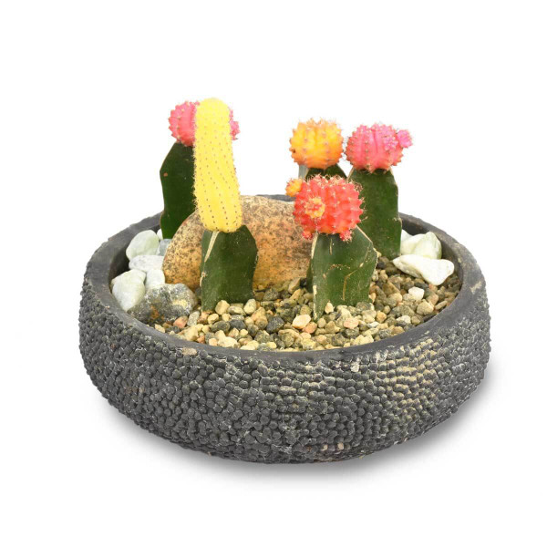 Best Cactus for Home | Burnaby BC | Adele Rae