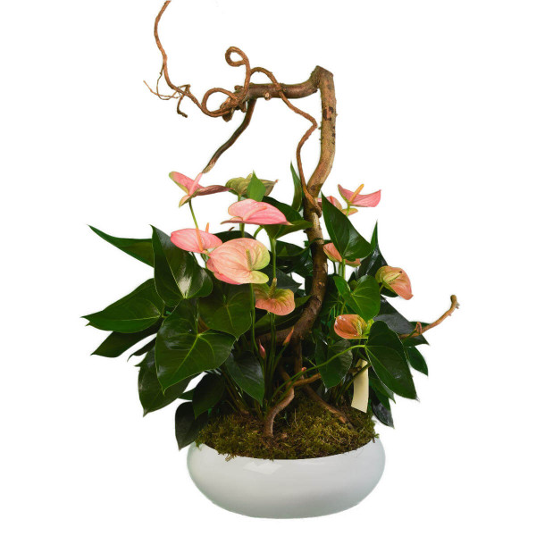 Tropical Flower dish garden delivery to Vancouver & Burnaby | Adele Rae Florist your local flower shop in Metro Vancouver