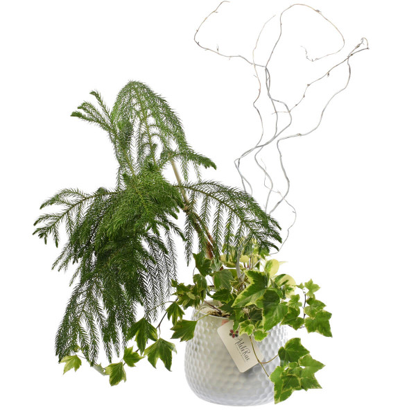 Indoor mini garden for decorating home or office in Vancouver & Burnaby | Adele Rae Florist