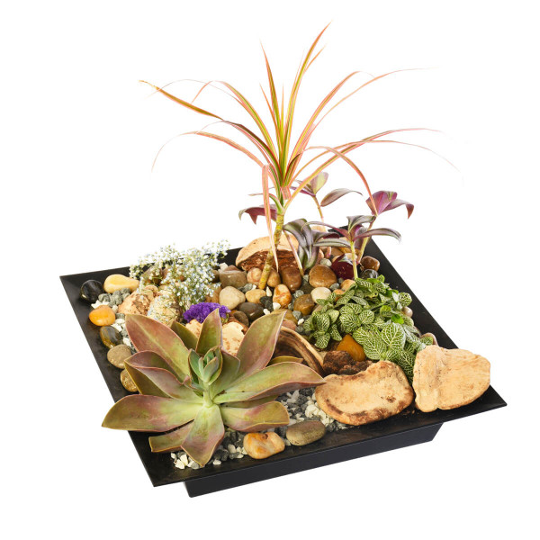 A tropical & succulent planter for your home or office | Succulent and Cacti Shop in Vancouver & Burnaby | Adele Rae Florist