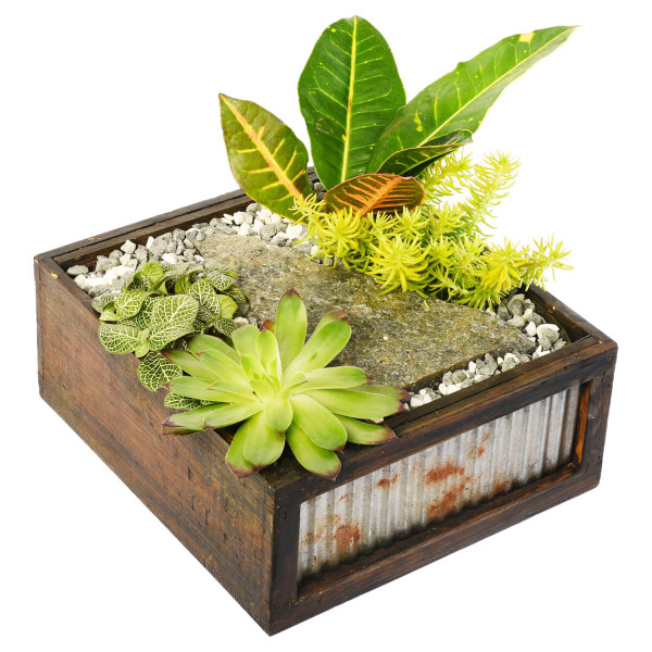 Succulent plant dish garden with sedum and tropical plants for Vancouver & Burnaby Delivery | Adele Rae Florist local Succulent and tropical plant Shop in Metro Vancouver