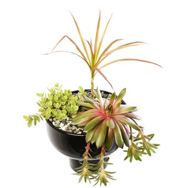 Planter in ceramic bowl with succulent and tropical plants for Vancouver & Burnaby delivery | Adele Rae Florists