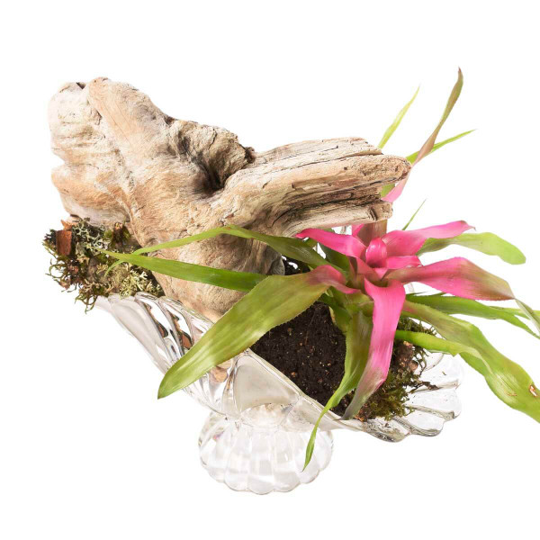 Indoor tropical plant for office decoration in Vancouver & Burnaby from Adele Rae Florist