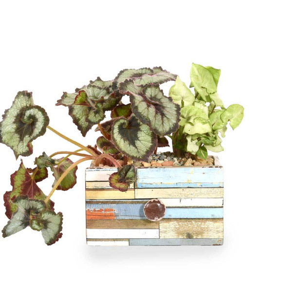 Meaningful Gifts for Him   Houseplants   Adele Rae