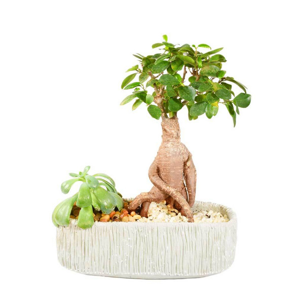 Best Bonsai Trees and Terrariums Vancouver - Adele Rae