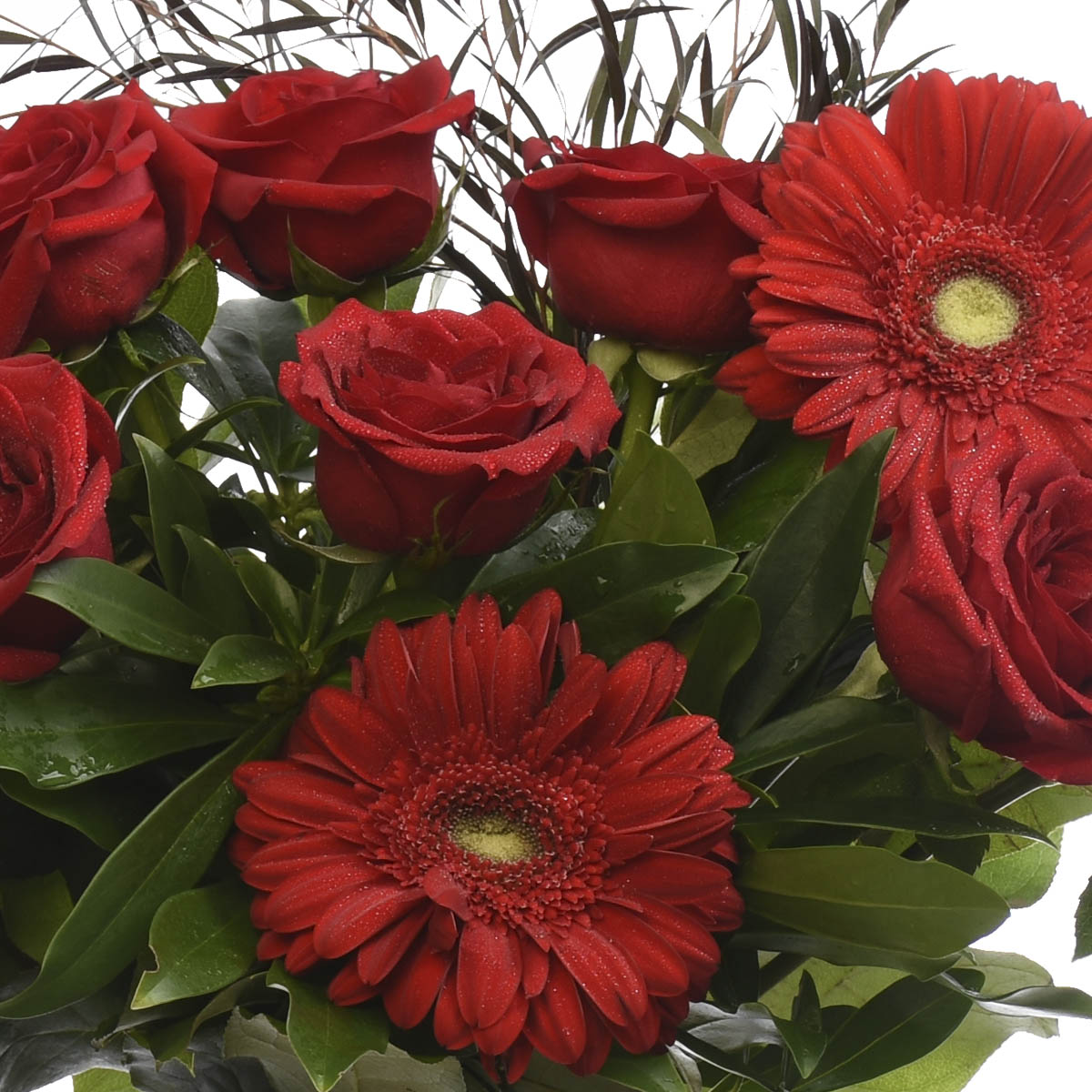 Red roses and gerberas. Adele Rae Burnaby, Brisith Columbia