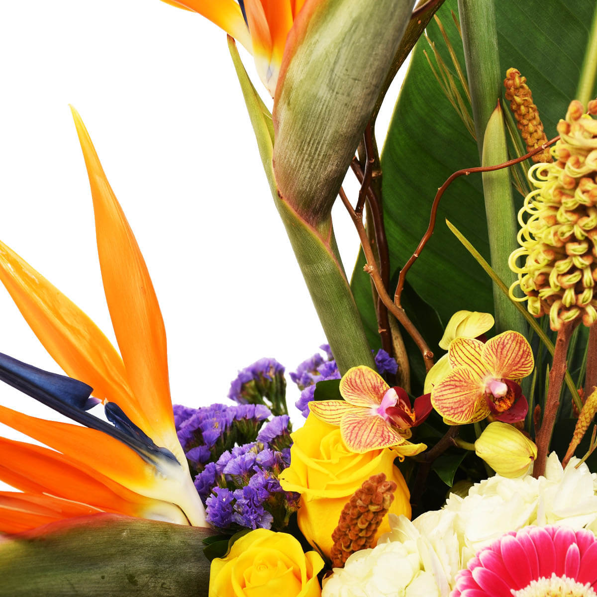 Tropical flower arrangement with birds of paradise from flower shop in Vancouver Adele Rae Florist.